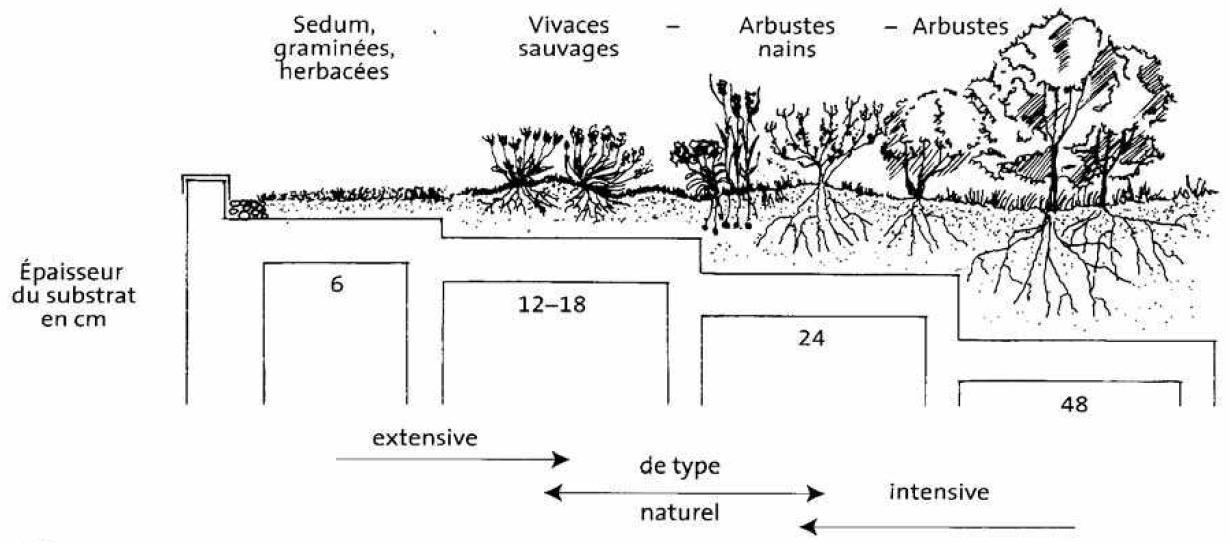 ... la toiture végétalisée > Les typologies de toitures végétalisées
